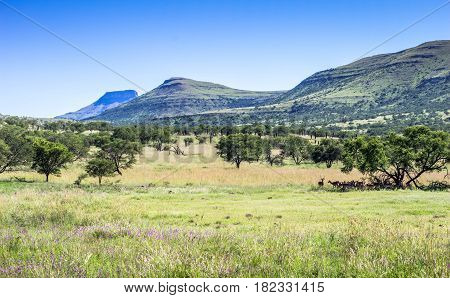 Game reserve grassfield landscape on a hot summer's day in South Africa