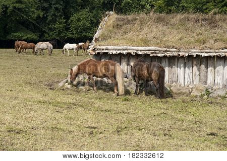 Horses in a field at an old barn