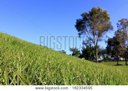 Grassy Hill with soft focus background