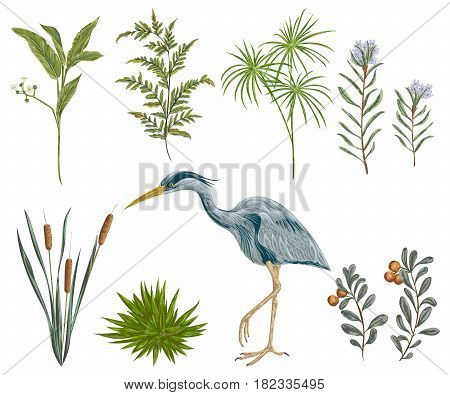 Heron bird and swamp plants. Marsh flora and fauna. Isolated elements Vintage hand drawn vector illustration in watercolor style