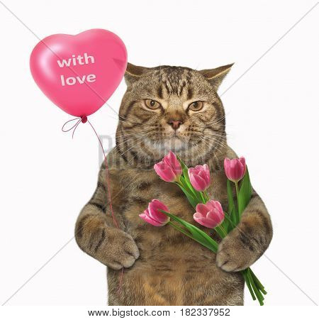 The cat in love is holding a heart-shaped balloon in one paw and a huge bunch of red tulips in the other. White background.