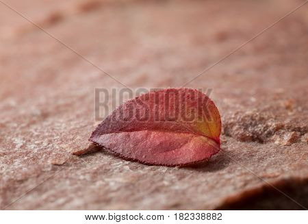 Wilted Leaf And Rock
