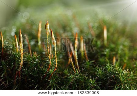 Forest Floor In Early Morning