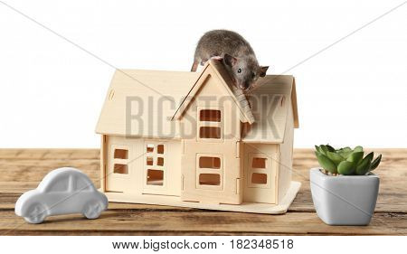 Cute funny rat and decorative house model on wooden table against white background