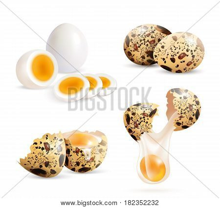 Quail eggs isolated realistic images set of whole eggs and cracked eggshell pieces with boiled egg slices vector illustration