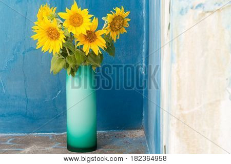 Sunflowers in a glass vase. Against blue colored wall as a background.