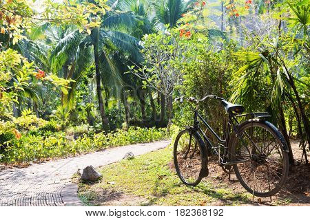 nature, season and environment concept - vintage bicycle parked and path at exotic summer park
