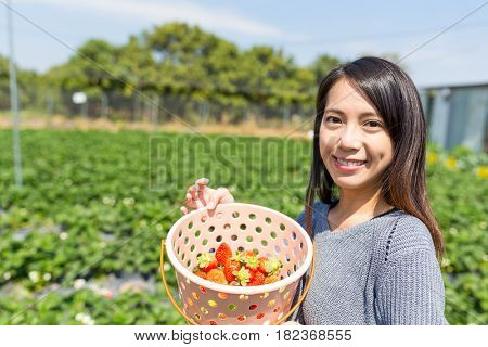 Woman holding basket of strawberry in field