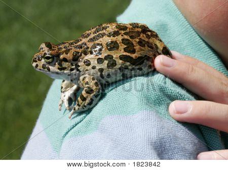 Frog On A Shoulder