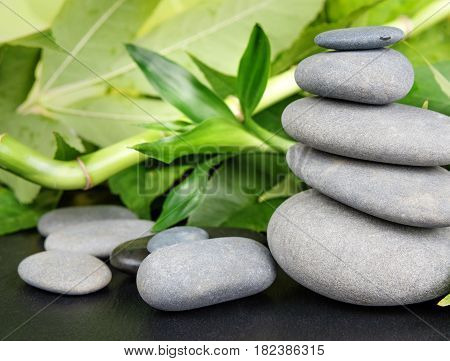 Spa concept with gray basalt massage stones and lush green foliage on a black background