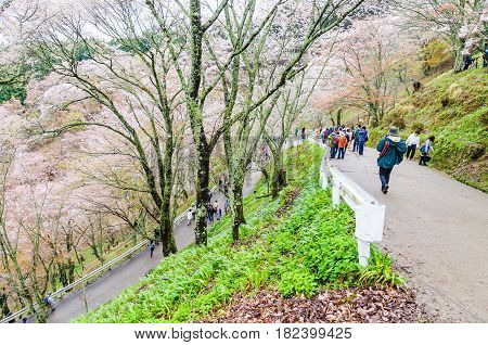 Nara Japan - April 112015: Mount yoshino is the best cherry blossom viewpoint in nara. Many tourists sightseeing and taking a picture