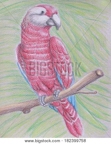 red parrot on tree drawing with pastels