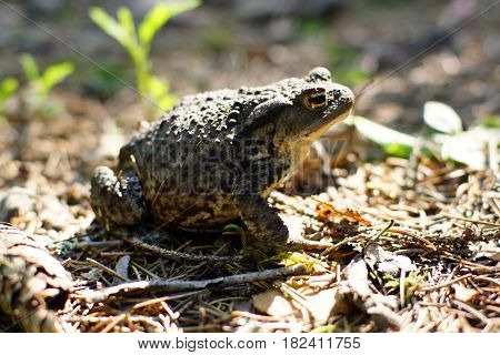 A forest toad is preparing to jump the sun illuminates a small glade.