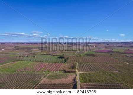 Blossoming peach tree landscape in Aitona a beautiful town in Catalonia Spain. Flowers sprout during the spring and the landscape is transformed. The fields flowered transmit sensations positive and of hope.