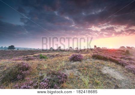 summer sunrise over pink heathland in Netherlands