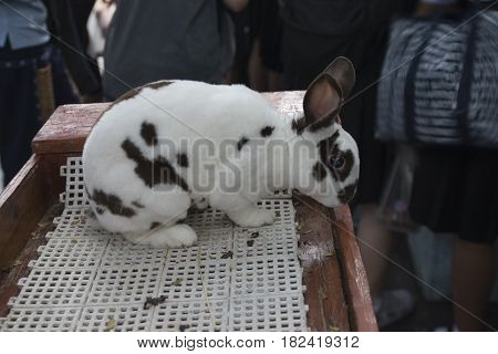 Rabbit in a Cage with selective and soft focus.
