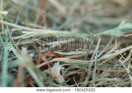shoot of a needle in a haystack nature metaphor