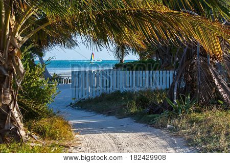 Sand along a beach in Belize with palm trees and a distant sail boat.
