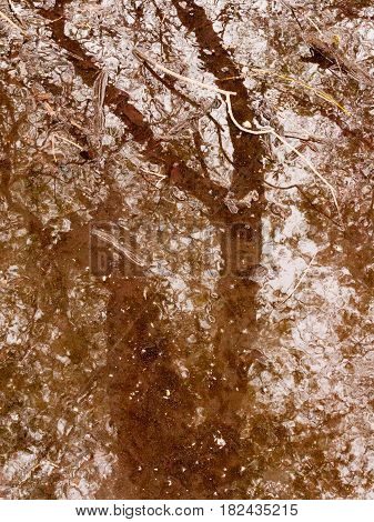 A River With Ripples In The Middle Of A Forest With Rain Water And Trees Reflected In It