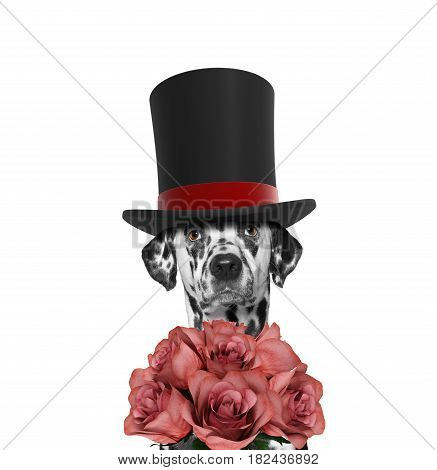Dog in a high hat cylinder with roses -- isolated on white