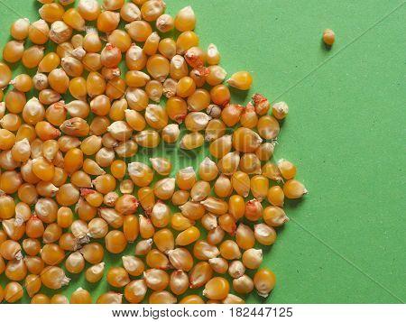 Pop Corn Maize With Copy Space