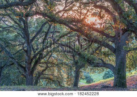 Chaparral Sunset. Santa Clara County, California, USA.
