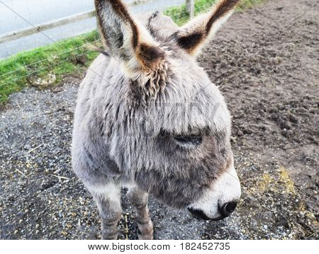 Donkey relaxing in a field at a Donkey Sanctuary