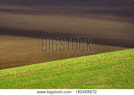 Hilly plowed field and seedlings in the foreground.
