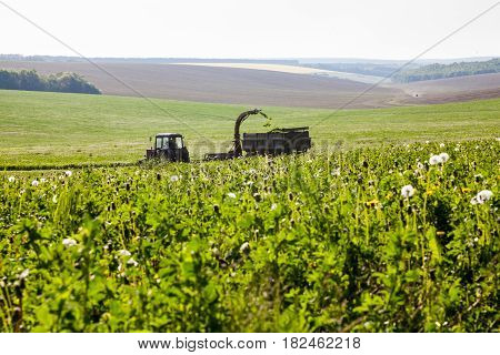 Mowing and pouring the grass into the trailer in the field. Agricultural machinery.