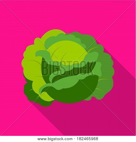 Cabbage icon flat. Single plant icon from the big farm, garden, agriculture flat.