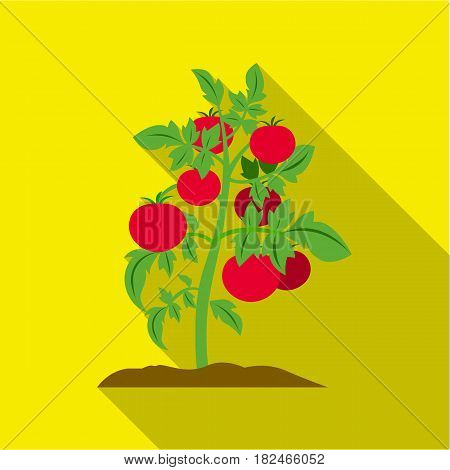 Tomato icon flat. Single plant icon from the big farm, garden, agriculture flat.