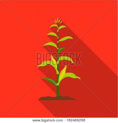 Corn icon flat. Single plant icon from the big farm, garden, agriculture flat.