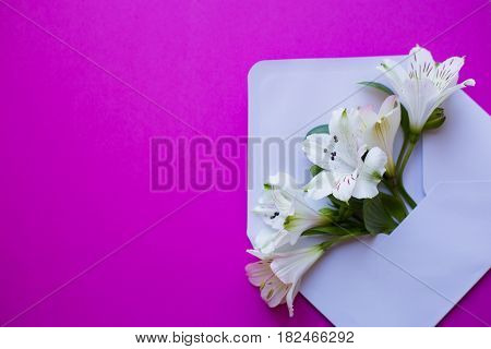 Beautiful tender bouquet of white Alstroemeria in white envelope on crimson background. Spring composition. Springtime card.