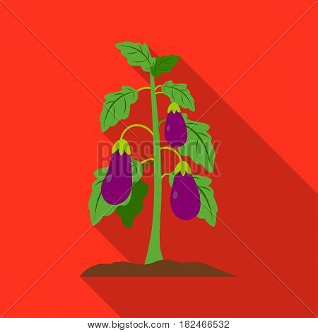 Eggplant icon flat. Single plant icon from the big farm, garden, agriculture flat.