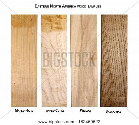 Eastern North America wood samples, Maple-hard, Maple-curly, Willow,Sassafras
