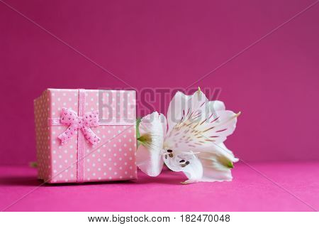 Pink Gift Box With Single Alstroemeria Flower On Crimson Background