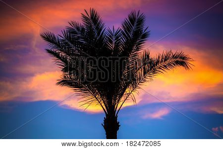 A Silhouette of palm trees on tropical sunset .