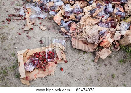 Rotten garden strawberries on the landfill. Plastic containers and cardboard boxes. Pile of garbage.