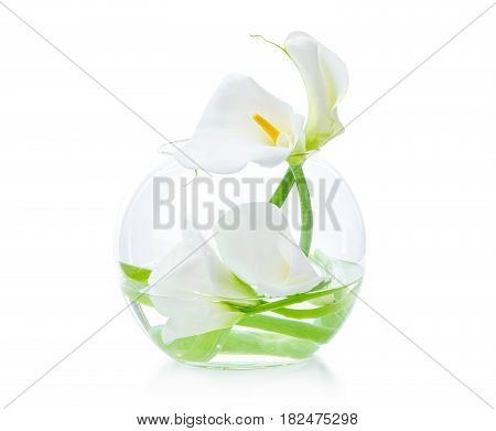 White calla lilies in glass vase over white background
