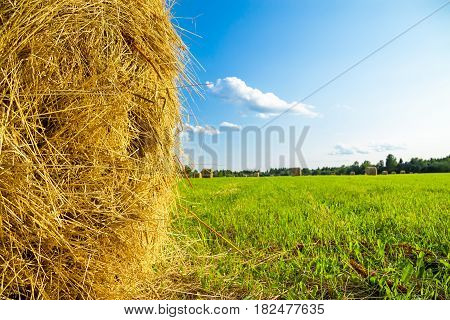 summer rural landscape with a field and hay. agriculture non urban scene. farm meadow