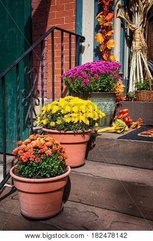 Colorful mums on the steps of this home in Eastern Pennsylvania.