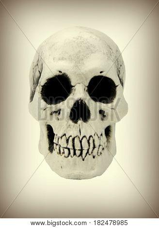 Human skull , close up image .