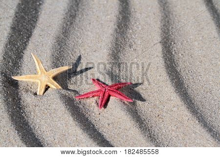 Red and yellow seastar , close up image