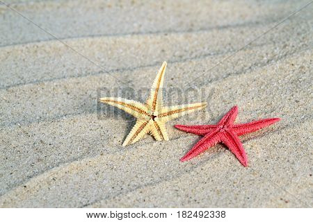 Red and yellow Seastar on beach sand