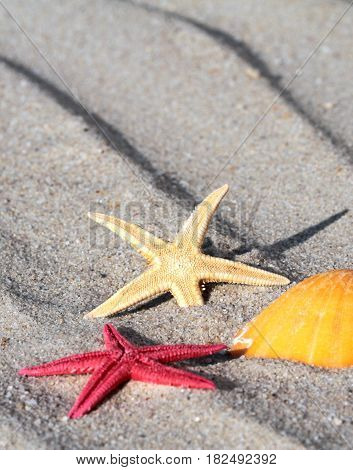 Close up image of star fishes and seashell on beach sand