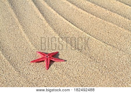 Red Seastar on beach sand close up image