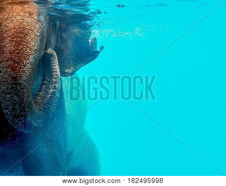 Wild elephant swimming in the water, Close up with place your text