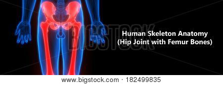 3D Illustration of Human Body Bone Joint Pains Anatomy (Hip with Humerus)