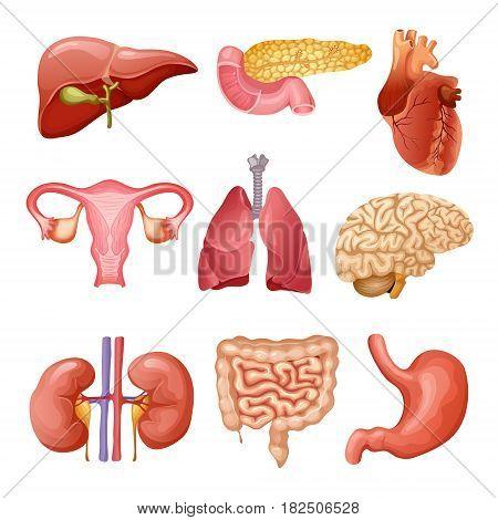 Cartoon Human Organs Vector Photo Free Trial Bigstock