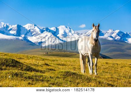 horse stand under the mountain